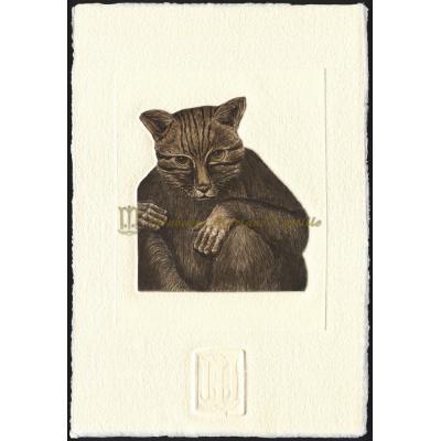 Mono Gato